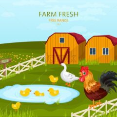 Free range chicken growing in the farm Vector illustration