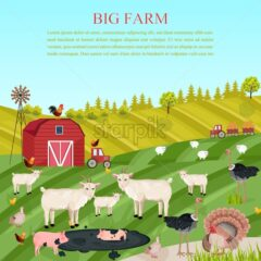 Goats, pigs and chicken animals at the farm Vector. summer green background food illustration