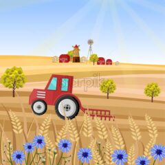 Tractor at the farm Vector illustration. Wheat field stalk. Provence harvest background
