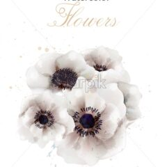White poppies flowers isolated Vector. Beautiful wedding card. Delicate background