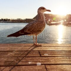 Seagull in port of Barcelona at sunset, Spain