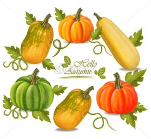 Autumn colorful pumpkins frame Vector. Fall season harvest detailed illustration - starpik