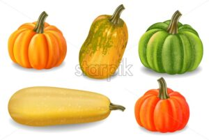 Autumn colorful pumpkins isolated Vector. Fall season harvest detailed illustration - starpik