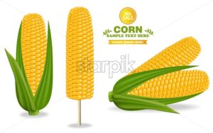 Corn harvest Vector. Detailed illustration label design decor 3d banner - starpik