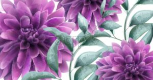 Dahlia purple flowers banner Vector watercolor. Beautiful poater vintage provence style - starpik