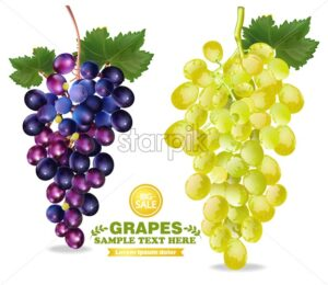 Grapes Vector realistic isolated bunch 3d detailed illustration - starpik