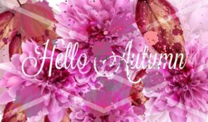 Hello autumn pink daisy flowers Vector banner watercolor style decor - starpik