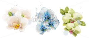Orchid flowers watercolor isolated Vector. Delicate floral decoration - starpik