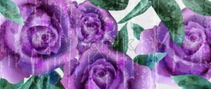Purple roses watercolor background Vector. Vintage greeting. Delicate floral frame decor bouquet - starpik