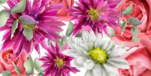 Spring daisy flowers background watercolor Vector. Beautiful vintage pastel pink colors floral decor banner - starpik