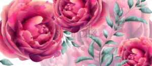 Wedding Invitation rose flowers watercolor banner Vector. Beautiful fuchsia colors floral decor - starpik