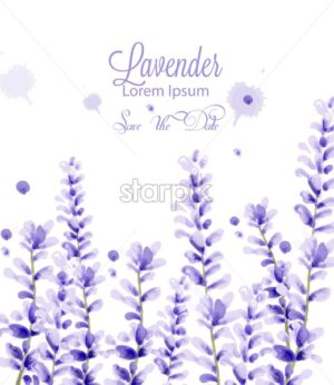 Lavender watercolor card Vector. delicate floral blooming decor. Wedding ceremony, postcard, Women day greeting. Beautiful pastel color - starpik