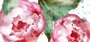 Peony flowers watercolor background Vector. Wedding Invitation, ceremony, delicate postcard, Women day greeting card. Beautiful spring trendy color - starpik