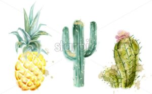 Pineapple and cactus set Vector watercolor. Exotic tropic collection painted style - starpik