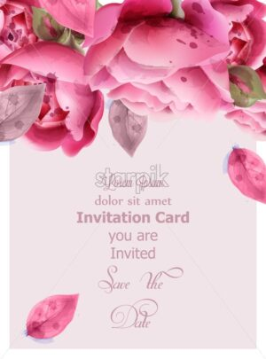 Pink roses watercolor Vector. Invitation card, wedding ceremony, delicate postcard, Women day greeting card. Beautiful color - starpik