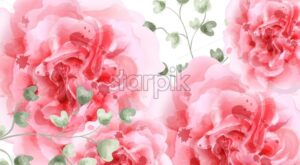 Pink roses watercolor background Vector. Top view. Invitation card, wedding ceremony, delicate postcard, Women day greeting card. Beautiful color - starpik