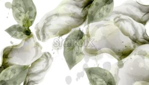 Spring white flowers bouquet watercolor background Vector. Roses, peony and delicate blooming flowers. Invitation card, wedding ceremony, delicate postcard, Women day greeting - starpik