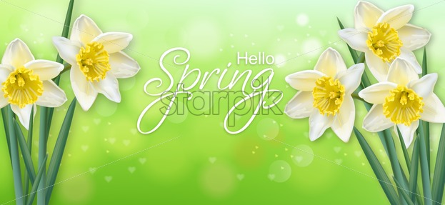 Daffodil spring flowers Vector realistic. Delicate narcissus bouquet illustration - starpik