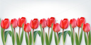 Pink tulip flowers on white background Vector realistic banner template - starpik
