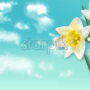 Spring card narcissus flowers bouquet and blue sky Vector realistic - starpik