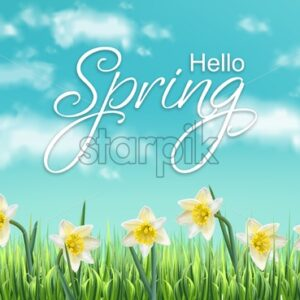 Spring card narcissus flowers fields and blue sky Vector realistic - starpik