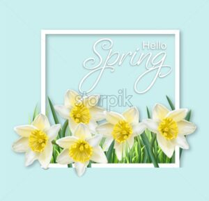Spring narcissus flowers frame Vector realistic. Delicate card bouquet. Spring message text - starpik