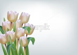 White tulip flowers on isolated Vector realistic banner template - starpik