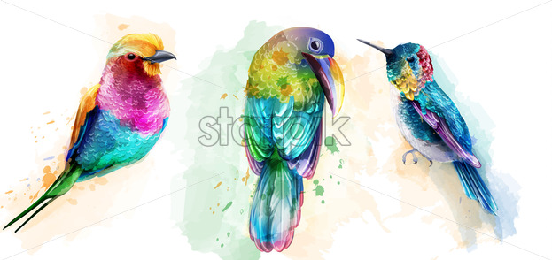 Colorful tropic birds watercolor Vector. Beautiful parrots, humming bird exotic set collection - starpik