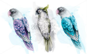 Colorful tropic parrot birds watercolor Vector. Beautiful exotic set collection - starpik