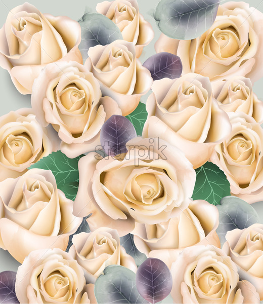 Cream Roses Bouquet Vector Watercolor Floral Background Beautiful Spring Floral Design Starpik Stock