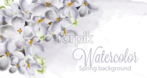 Dpring hydrangea flowers Vector. Romantic floral idelicate decoration. Women day, Valentines Day, sales and other event - starpik