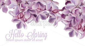 Hello spring background with purple lilac flowers Vector watercolor. Romantic floral wedding or greeting card decoration. Women day, Valentines Day, sales and other event - starpik