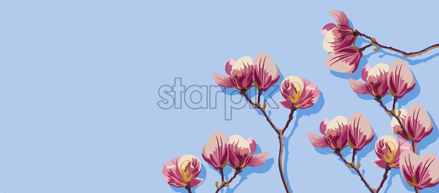 Magnolia flowers spring Vector. Beautiful card templates. Blue background - starpik