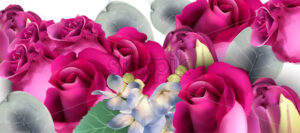 Pink roses bouquet Vector watercolor. Floral background. Beautiful spring floral design - starpik