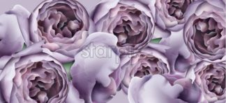 Purple peony flowers background watercolor Vector. Romantic floral invitation or greeting card decoration. Women day, Valentines Day, sales and other event - starpik