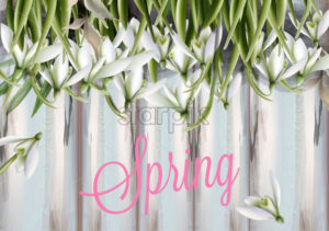 Snowdrops flowers Vector watercolor. Spring Summer trendy card - starpik