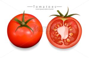 Tomatoes sliced isolated Vector realistic. Detailed 3d illustration template for label, icon, product placement - starpik