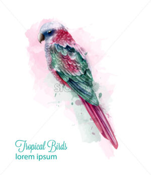 Tropic colorful parrot bird Vector watercolor. Cute bird illustration. blue colors splash - starpik