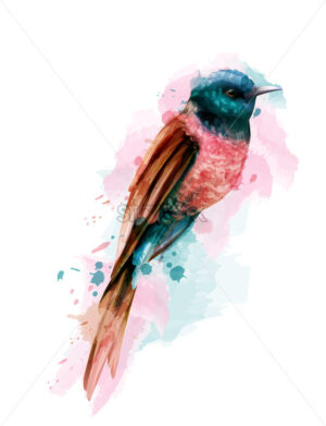 Tropic colorful small bird Vector watercolor. Cute bird illustration. blue colors splash - starpik