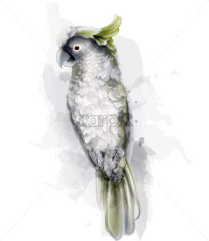 Tropic parrot bird Vector watercolor. Cute bird illustration. blue colors splash - starpik
