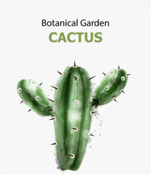 Cactus watercolor isolated. Botanic garden Vector illustration - starpik