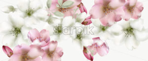 Cherry flowers watercolor Vector. Delicate spring blossom background - starpik