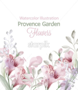 Provence flowers garden Vector watercolor. Lavender card delicate pastelate color - starpik