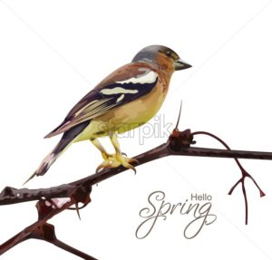 Sparrow on a branch isolated Vector. Spring card. spring moment - starpik