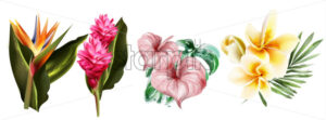 Tropic flowers set collection Vector watercolor. Exotic botanical decor - starpik