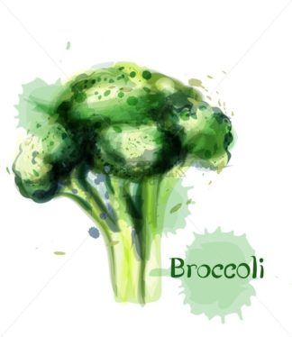 Brocoli icon Vector watercolor. delicious green vegetable template - starpik