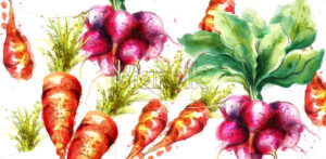 Carrots and radish Vector watercolor. Fresh spring veggies - starpik