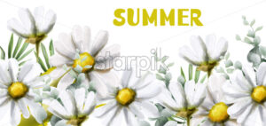 Chamomile summer background Vector watercolor. Vintage flowers white colors. Delicate frame decor - starpik