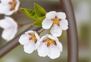 Cherry flowers Vector realistic branches. Spring blossom. Holiday card - starpik