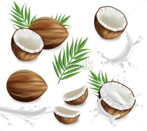 Coconuts with splash set collection Vector realistic. Layout template tropic exotic card - starpik